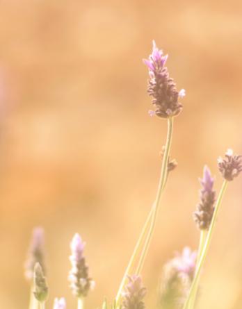 plants de fleurs